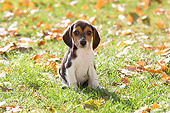 PUP 09 YT0001 01
