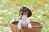 PUP 09 YT0002 01
