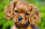 PUP 10 AC0001 01