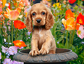 PUP 10 BK0005 01