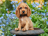 PUP 10 BK0006 01