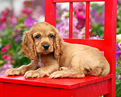 PUP 10 BK0007 01
