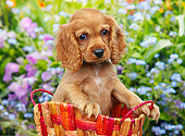 PUP 10 BK0009 01