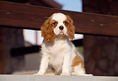 PUP 10 CB0003 01