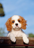 PUP 10 CB0004 01