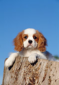 PUP 10 CB0008 01