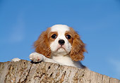PUP 10 CB0009 01