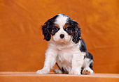 PUP 10 CB0011 01