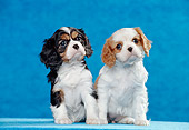 PUP 10 CB0013 01