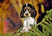 PUP 10 CB0019 01