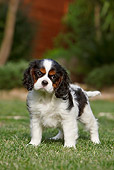 PUP 10 CB0022 01