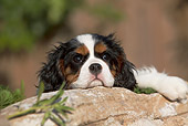 PUP 10 CB0028 01