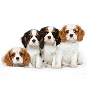 PUP 10 CB0030 01