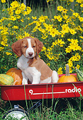 PUP 10 CE0042 01