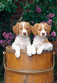 PUP 10 CE0045 01