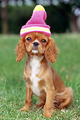 PUP 10 GL0004 01