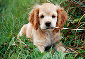 PUP 10 GR0039 01