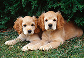 PUP 10 GR0043 01