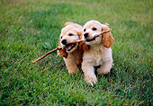 PUP 10 GR0045 01