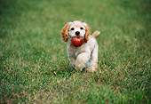 PUP 10 GR0047 01