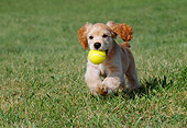 PUP 10 GR0048 01