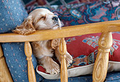 PUP 10 GR0051 01