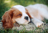 PUP 10 GR0052 01
