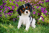 PUP 10 GR0053 01