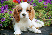 PUP 10 GR0056 01