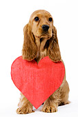 PUP 10 JE0003 01
