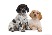 PUP 10 JE0014 01