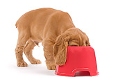 PUP 10 JE0020 01