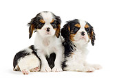 PUP 10 JE0023 01