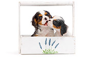 PUP 10 JE0026 01