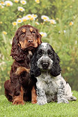 PUP 10 JE0036 01