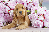 PUP 10 JE0043 01