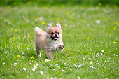 PUP 10 JE0045 01
