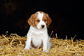 PUP 10 KH0002 01
