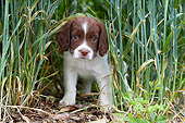PUP 10 NR0031 01
