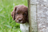 PUP 10 NR0033 01