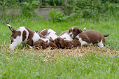 PUP 10 NR0035 01