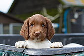 PUP 10 NR0037 01