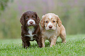 PUP 10 NR0041 01