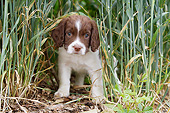 PUP 10 NR0044 01