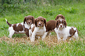 PUP 10 NR0045 01