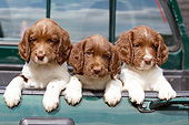 PUP 10 NR0050 01