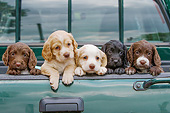 PUP 10 NR0051 01