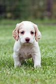 PUP 10 NR0052 01