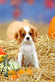 PUP 10 PE0002 01