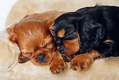 PUP 10 PE0003 01